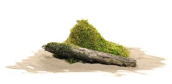 Green moss on rotten tree and sand isolated on white background