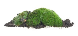 Green moss on soil, dirt pile with grass isolated on a white background. Pile of green moss.