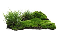 Green moss on soil, dirt pile with grass isolated on white background
