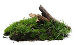Green moss on soil, dirt pile with tree branches and grass isolated on white background