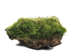 Green moss on stone, isolated on white background