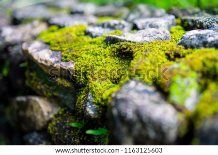 Green Moss on Stone Wall #1163125603