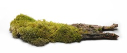 Green moss on tree bark isolated on white background, side view