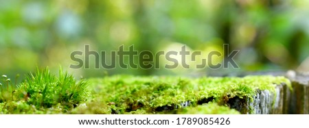 Green moss stump background product montage or display template. Blurred forest abstract moss stump on empty summer background for product design. Outside picnic bbq product blur moss stump background