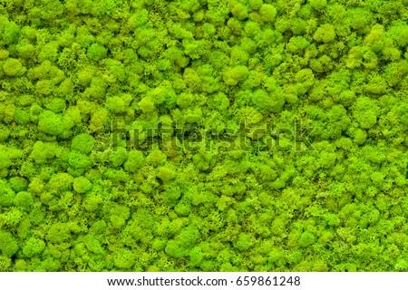 Green moss texture.
