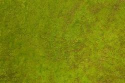 green moss texture background
