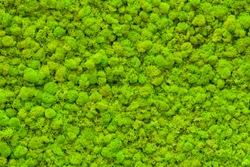 Green moss texture. Green background. Green texture. Green wall. Wall decoration. Moss decor