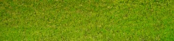 green moss texture Wallpaper, background with copy space