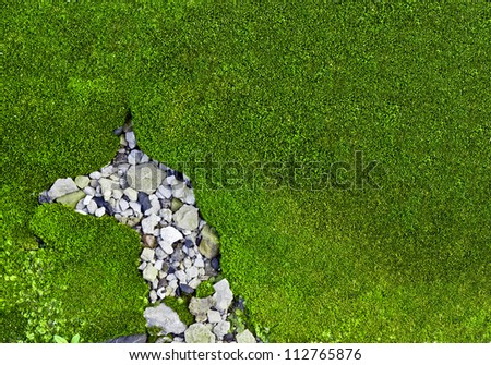 Green Moss with stones
