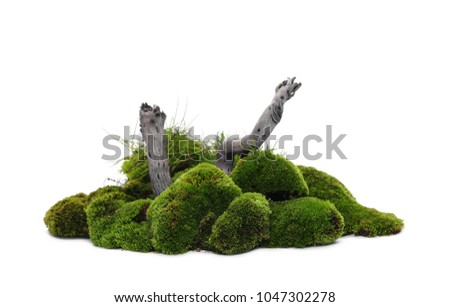 Green moss with twig isolated on white background #1047302278