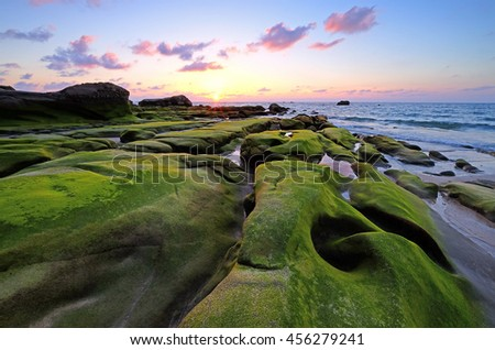Green Mossy covered rock at the beach during sunset. #456279241