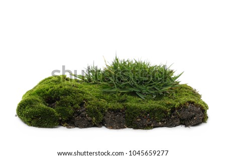 Green mossy hill and grass isolated on white background and texture