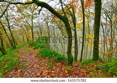Green mossy rocks and trees. Ground covered with autumn leafs. Mountain landscape. Vresse sur Semois. Ardennes. Belgium.