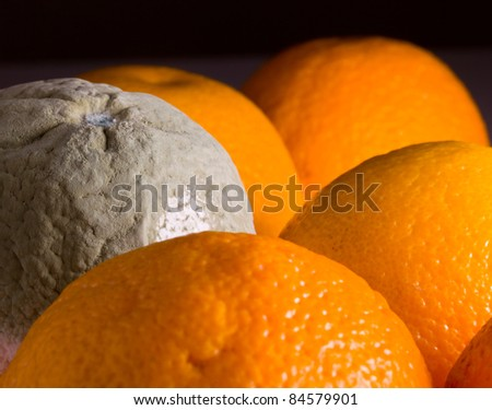 Green mouldy powder on the side of an orange among other oranges