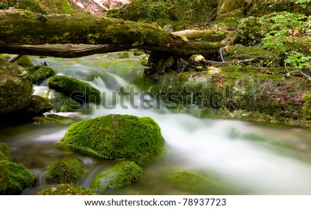 Green mountain stream in Crimean forest