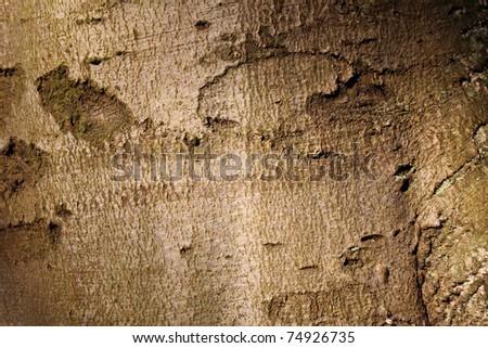 green n tree bark texture background