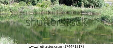 Green natural lake on Menderes River in Summer Stok fotoğraf ©