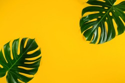Green natural tropical monstera leaves frame on bright yellow minimal background. Abstract summer flat lay concept. Copy space.