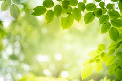 Green nature background. Closeup view of green leaf with beauty bokeh under sunlight for natural and freshness wallpaper concept