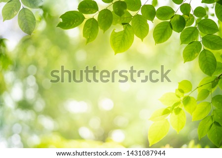 Green nature background. Closeup view of green leaf with beauty bokeh under sunlight for natural and freshness wallpaper concept #1431087944