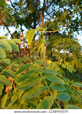 Stock Photo Green Nature Background. Green Insect On The Branch. Green Grasshopper On Tree.