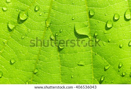 Green nature background using as background or wallpaper, backgrounds concept.