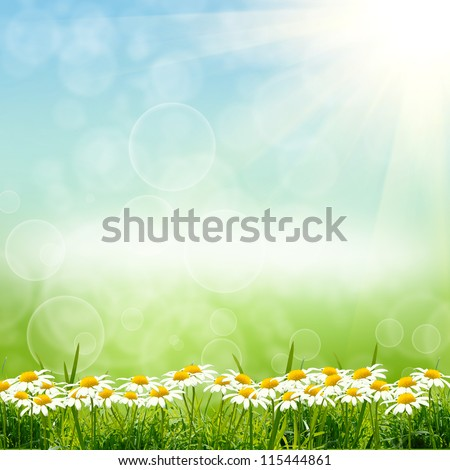 green nature background with sky