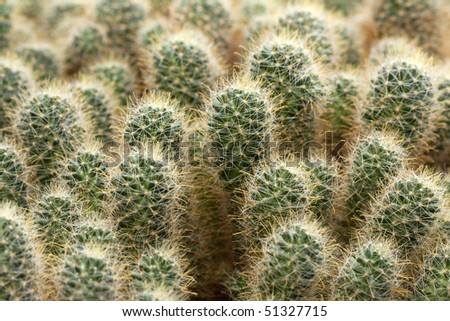 Desert Cactus PowerPoint Template Backgrounds  03383