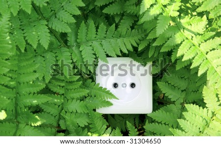 Green nature energy, socket in the fern