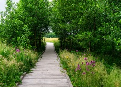 Green nature gateway of tree branches on flowering meadow. Wooden pathway goes through gate. Summer adventure landscape in Polesie National Park in Poland.
