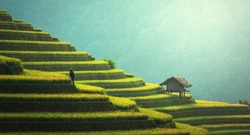 Green Nature mountain step agriculture in Asia with small hut fully nature love HD earth cool climate background