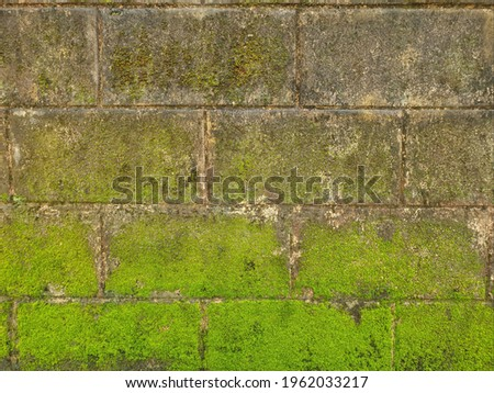 Green nature on the old wall. Green moss grows on the old wall In a tropical rainforest shelter. Green mos on brick wall texture Stock fotó ©