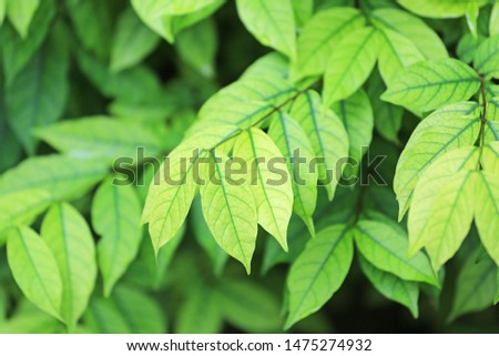 Green nature tree leaf background in morning light. Fresh natural background.