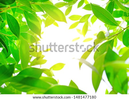 Green nature tree leaf background in morning light with copy space. Fresh natural background.