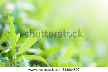 Green nature with copy space using as background or wallpaper. #538684507