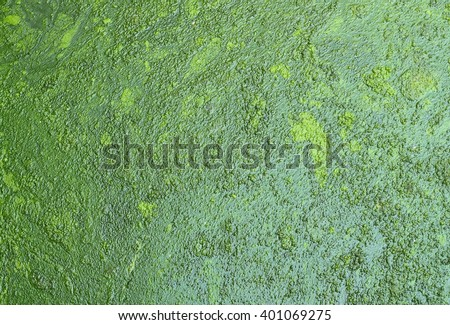 green of swamp texture