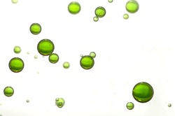 Green oil bubbles soars over a blurred background