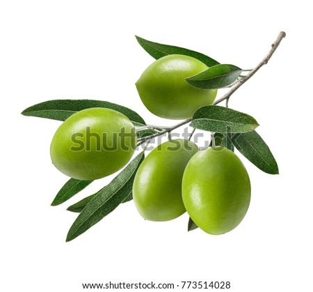 Green olive branch isolated on white background as package design composition