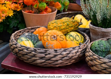 Green, orange and yellow pumpkins in the basket on the table #731192929