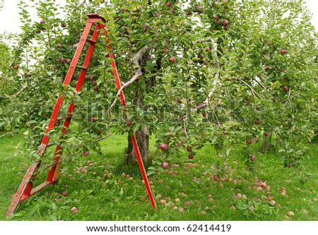 Green orchard with wooden ladder to pick up apples.