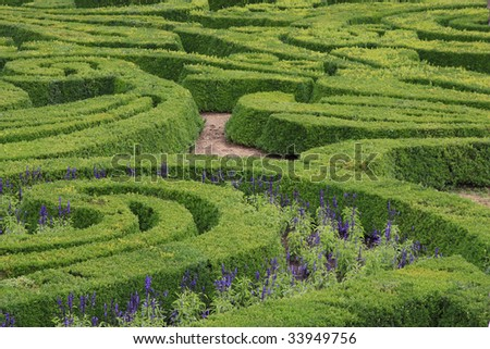 Green ornamental maze in the formal garden.