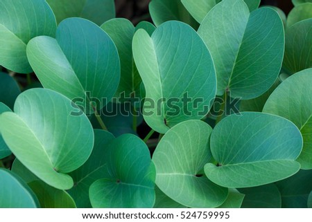 Green oval leaves at cloudy day background. Top side view. #524759995