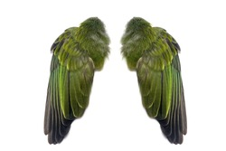 Green pair of folded bird wings isolated on white