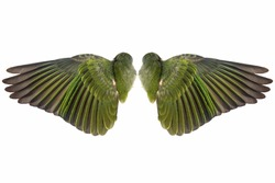 Green pair  of sprawling bird wings  isolated on white
