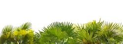 green palm foliage stripe isolated on white background