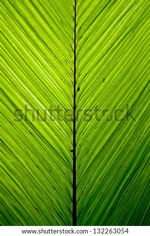Green palm leaf pattern in the jungle backlit