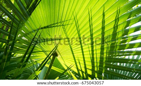 Green Palm Leaves #675043057
