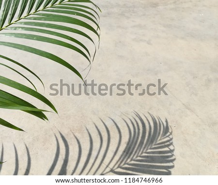 Green palm leaves and shadows palm leaves.