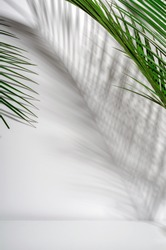 Green palm leaves and their shadow on a white wall. Tropical green summer background. Copy space