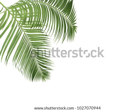green palm leaves on white background #1027070944